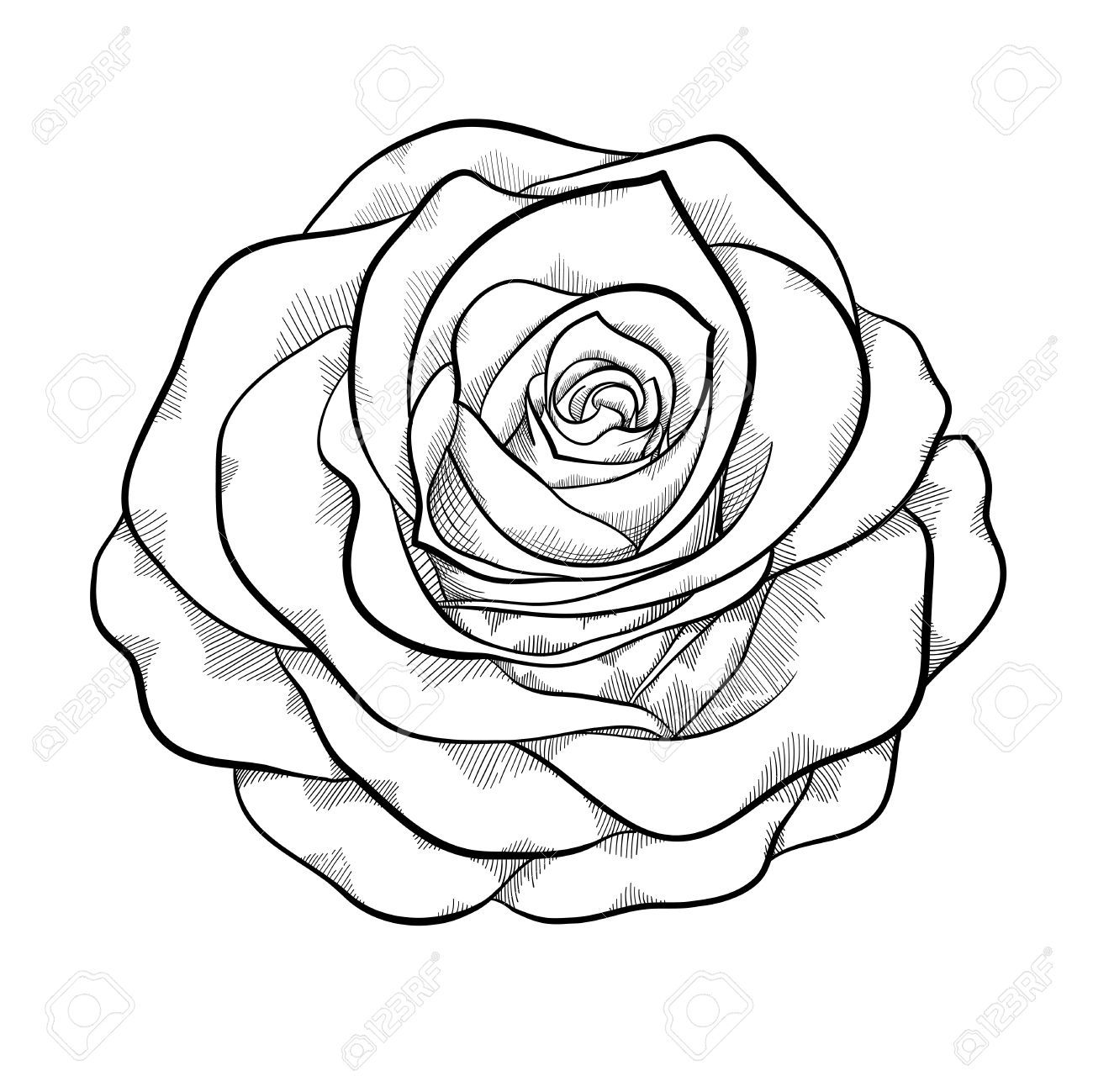 Simple Rose Tattoo Outline: Rose Drawing Simple, Black, White Drawing