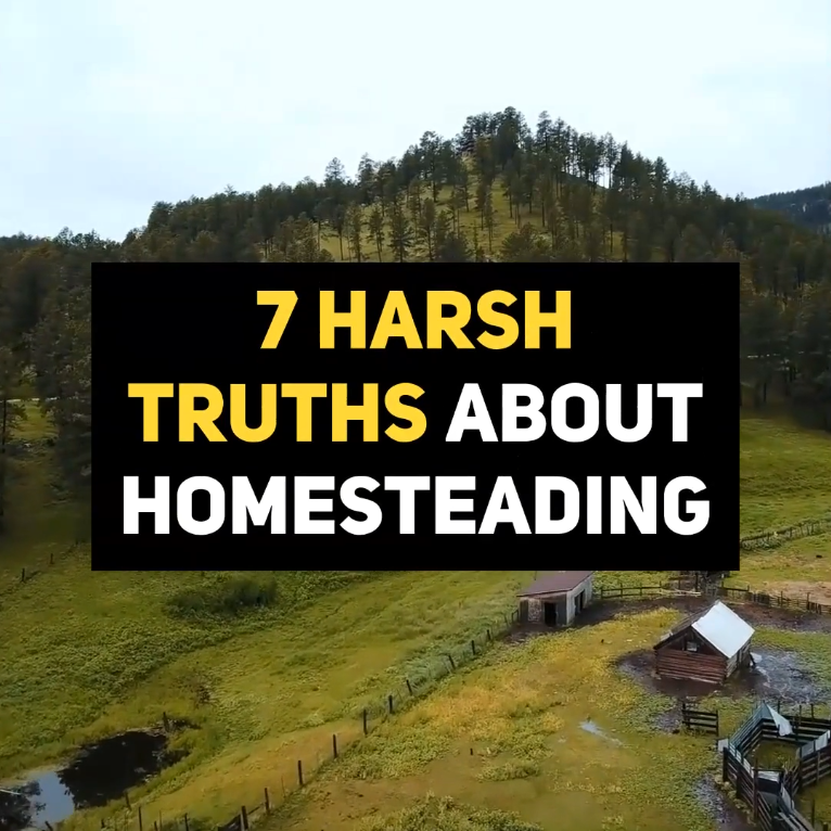 7 Harsh Truths About Homesteading is part of Homesteading, Homestead survival, Urban homesteading, Homestead farm, Homesteading skills, Farm life - If you are thinking of homesteading, you may be seeking a way out of the typical consumerdriven lifestyle of the 21st century  However, in order to be successful as a homesteader, you need to take off your rosecolored glasses and realize that homesteading requires hard work and dedication