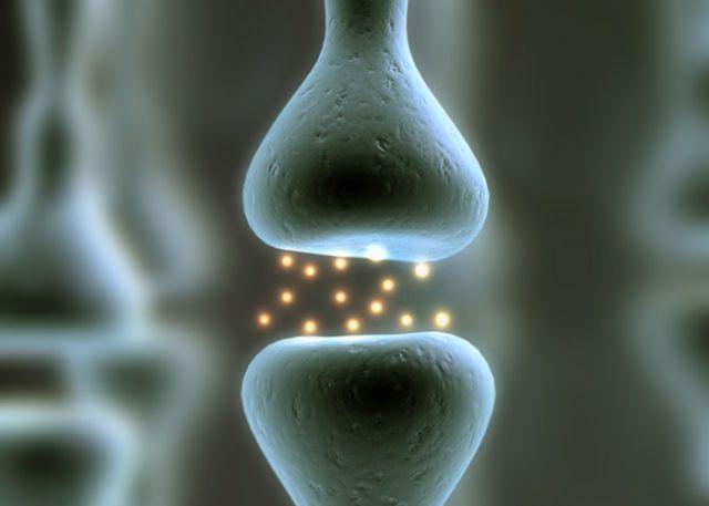Neurons position their parts for rapid communication - http://www.sogotechnews.com/2016/08/04/neurons-position-their-parts-for-rapid-communication/?utm_source=Pinterest&utm_medium=autoshare&utm_campaign=SOGO+Tech+News