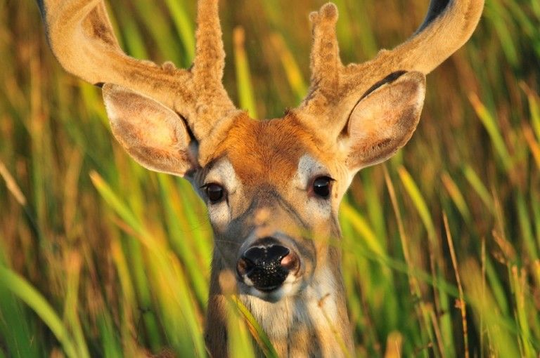 Stop the Illegal Hunting and Killing of Deer!!!!!