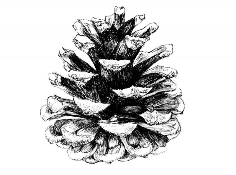 Amazing Black Ink Pine Cone Tattoo Design | Bongs in 2019 ...