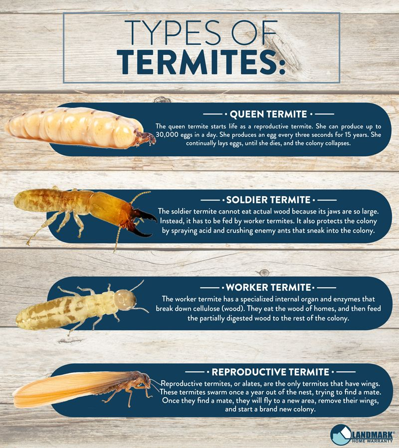 Did You Know There Are Four Different Types Of Termites In Each