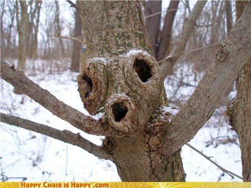 Skræmmende træ.