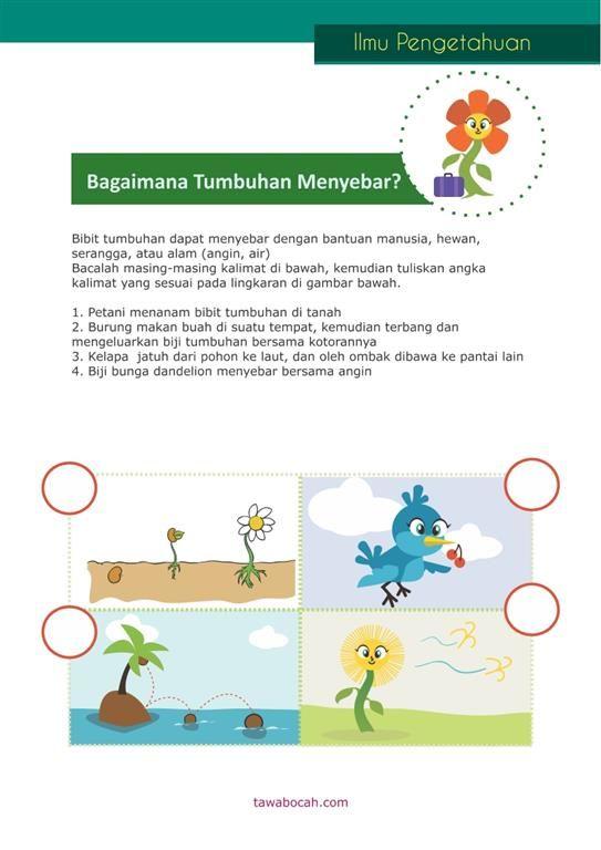 Belajar Anak Tumbuhan 6 Belajar Kegiatan Untuk Anak Anak