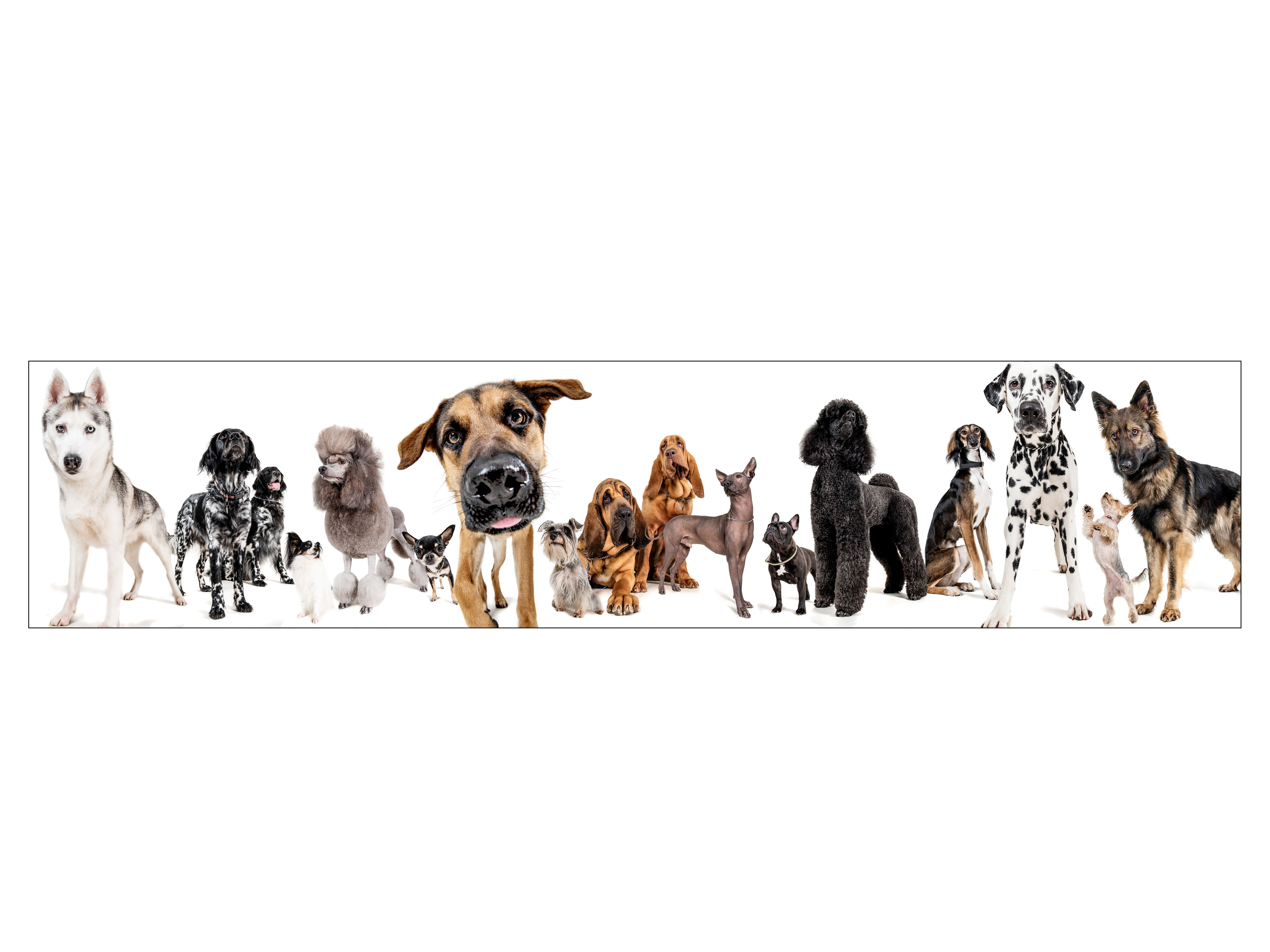 Pet Photography Hertfordshire All Breeds Of Dogs Collection Of