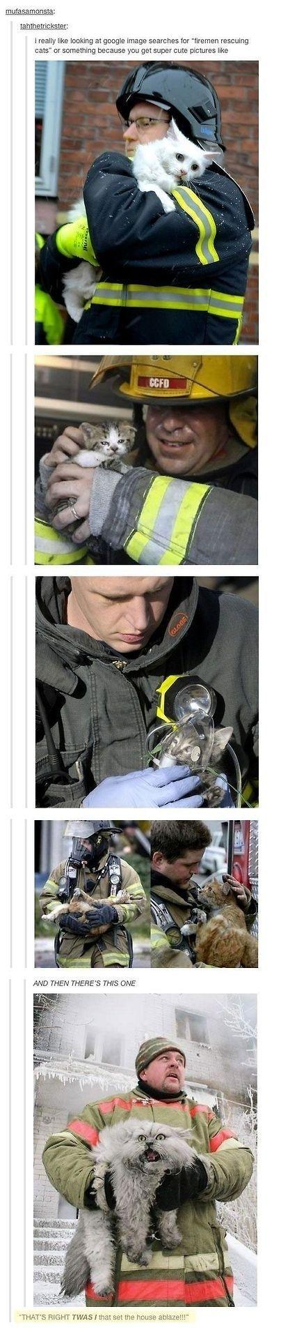 Diese Katze, die das Haus definitiv in Brand gesteckt hat: 32 Katzen, die sich komplett selbst übertroffen haben
