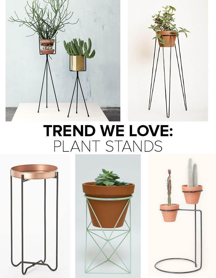 Trend We Love: Plant Stands | Plants, Greenery and Gardens
