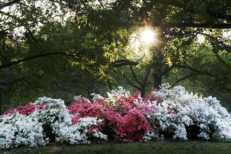 Central Park by Olivia Vivanco