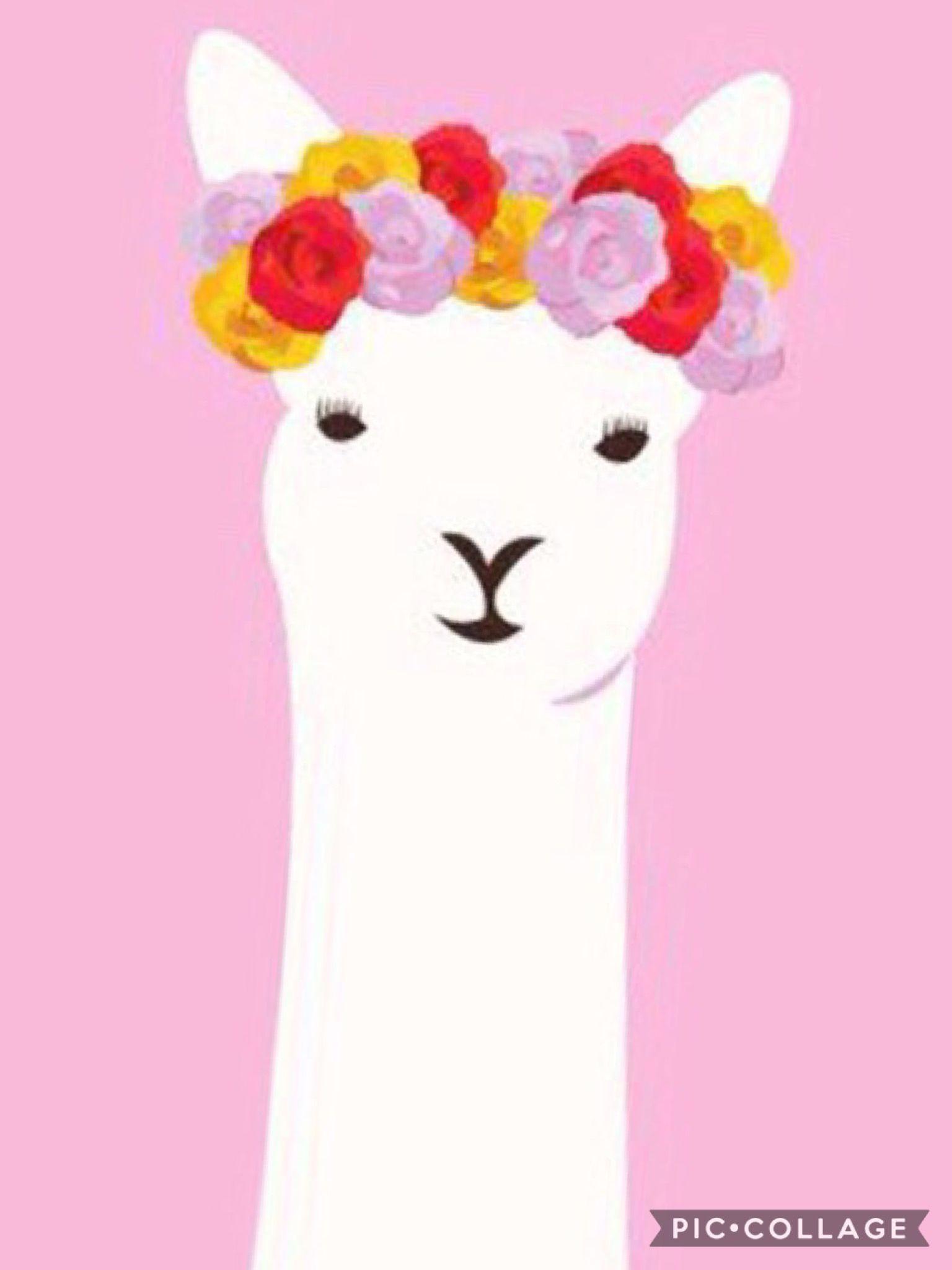 When ur a llama but u still want a flower crown art pinterest when ur a llama but u still want a flower crown izmirmasajfo