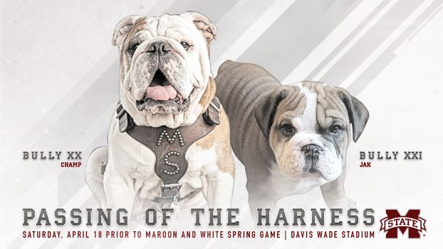 Mississippi State S Bully Xx Is Retiring And Passing The Harness