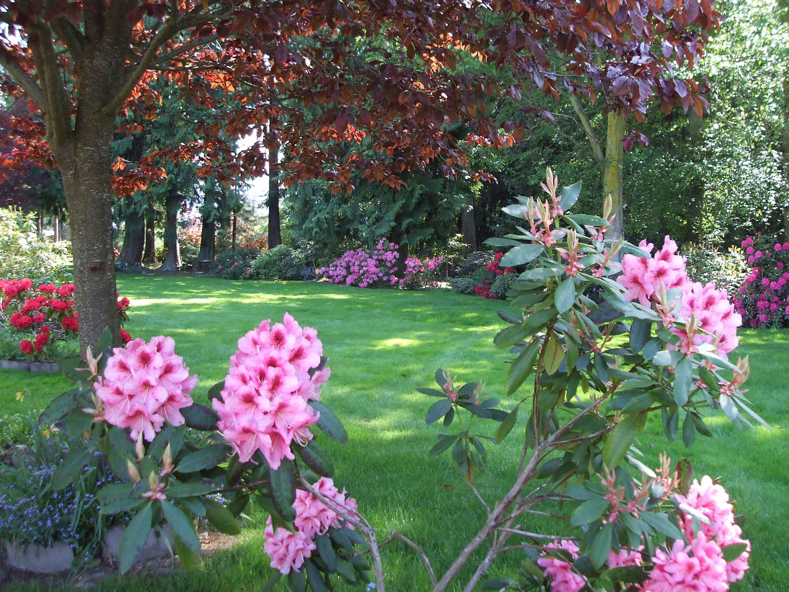 Rhododendrons In Bloom At Sea Cliff Gardens Bed And Breakfast