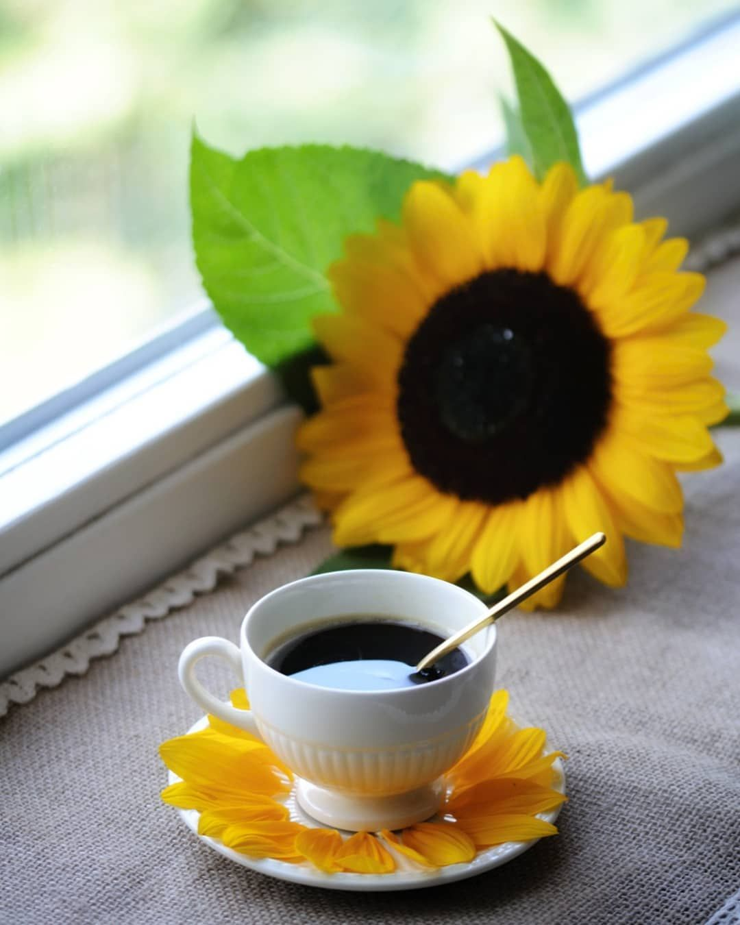 Image may contain flower and plant good morning coffee