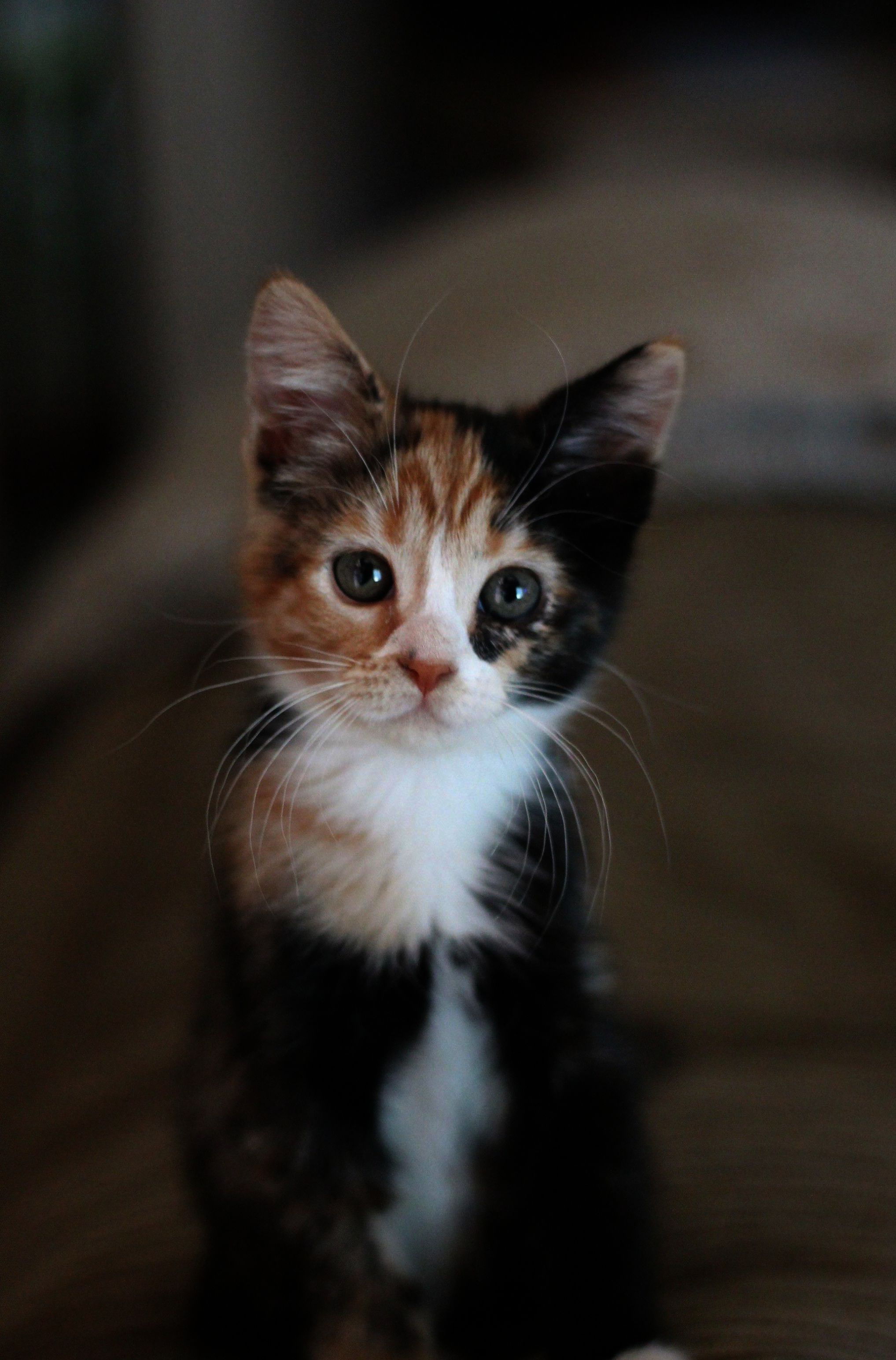 Cute Baby Kitten Puppy Pictures Near Cute Baby Kittens Images Around Cute Animals Clapping Gif Easy But Cute Animals To D Cute Cats Kittens Cutest Pretty Cats
