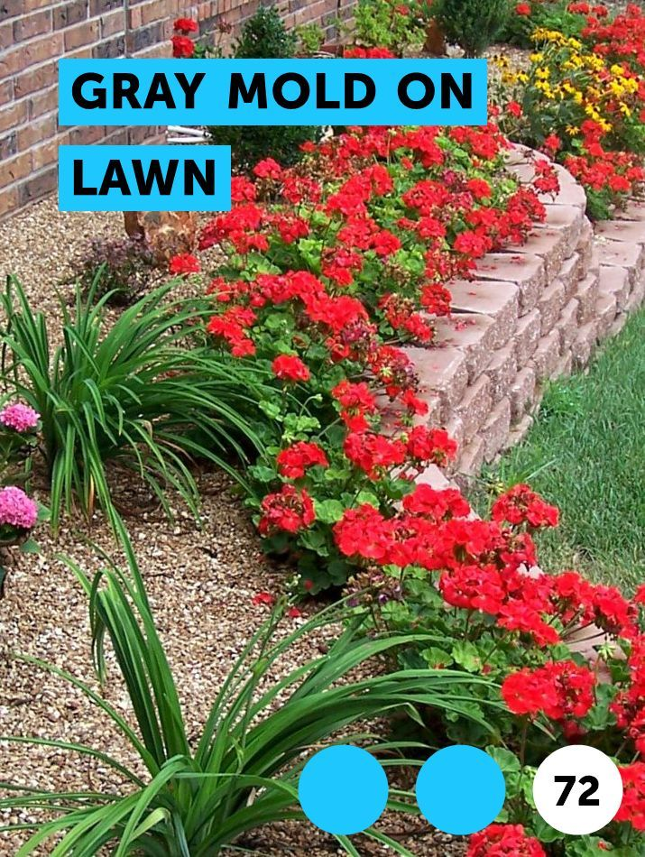 Learn Gray Mold on Lawn How to guides, tips and tricks