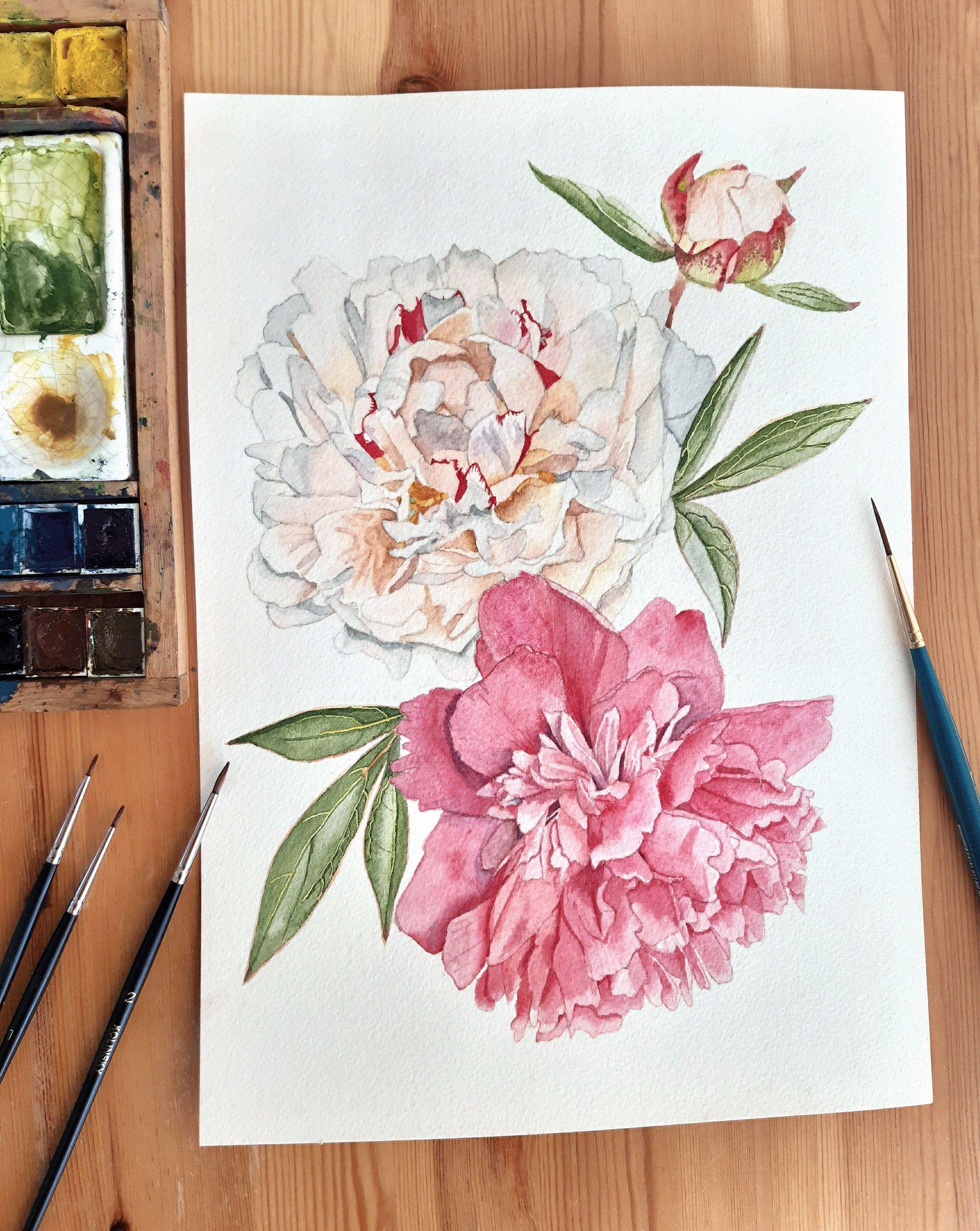 Watercolor painting of white and pink peonies. #watercolorart #peonies #floralart