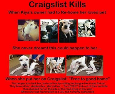 Please Do Not List Pets On Craigslist Animals Pets Love Pet
