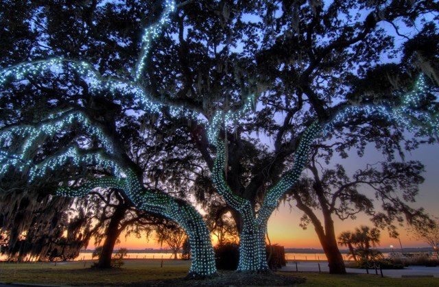 Lighted Oak Tree @JekyllClubHotel #classiclegacy Fall and - halloween club decorations