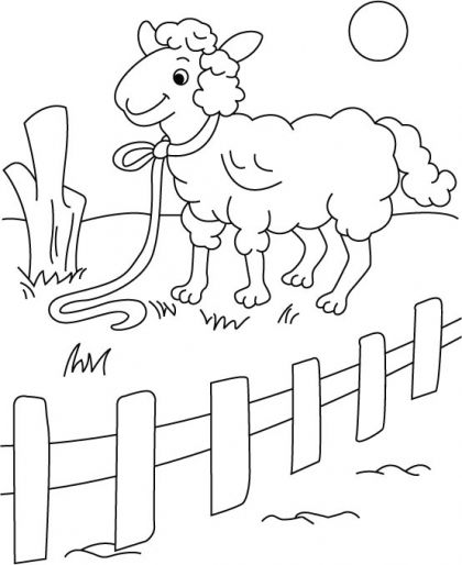 Sheep rest, aloof in fence coloring pages Download Free
