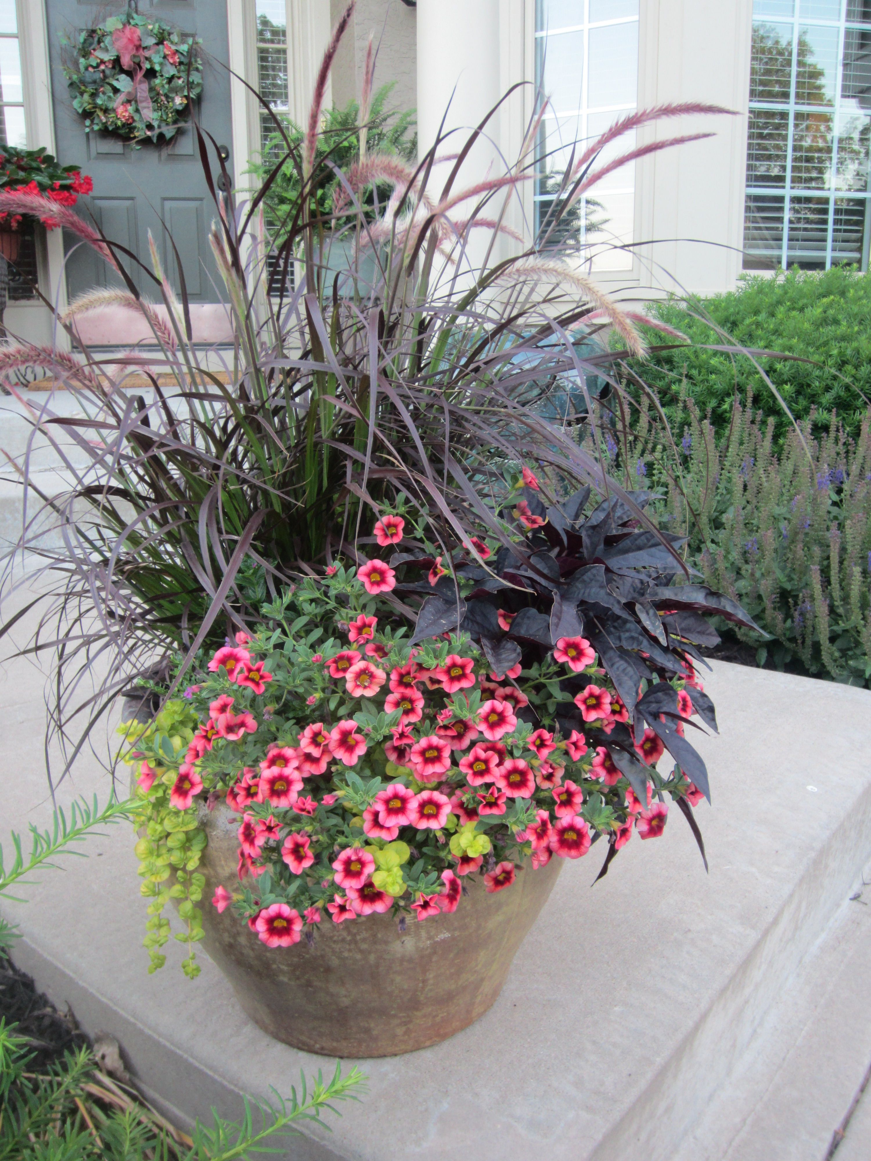 Lovely This years summer planters purple fountain grass million bells coralberry punch color