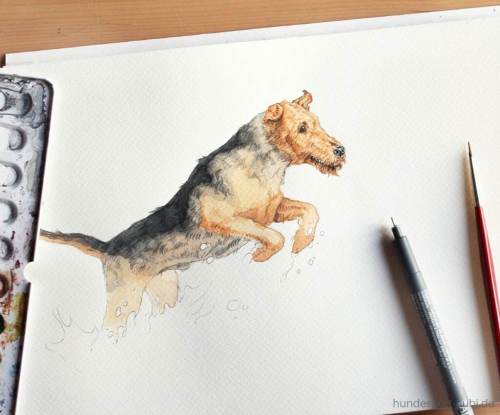 Hundesport Kalender 2020 Mit Handgemalten Aquarellen Making Of