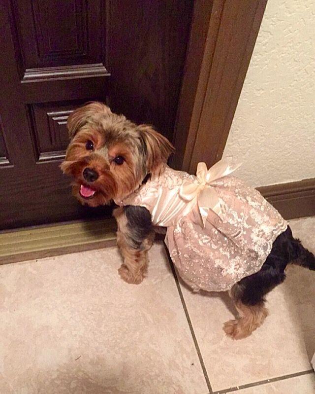 Lost Dog Female Homestead Fl Usa 33030 Losing A Dog Dogs