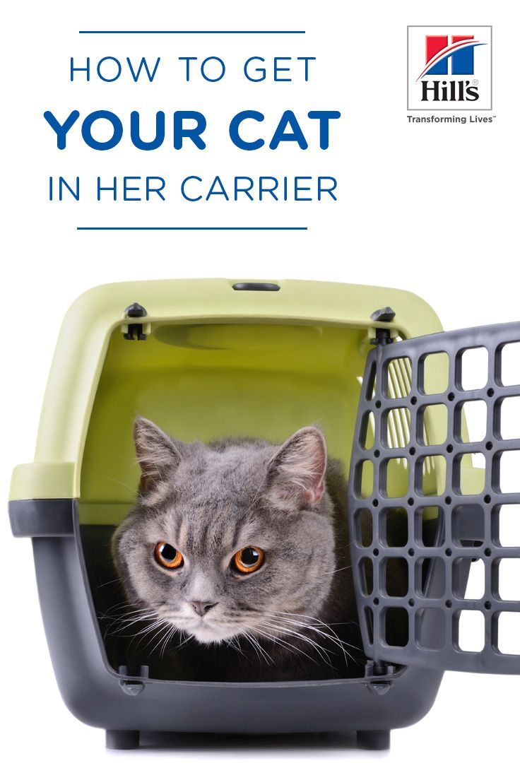 How to Get Your Cat Used to Her Carrier Cat carrier