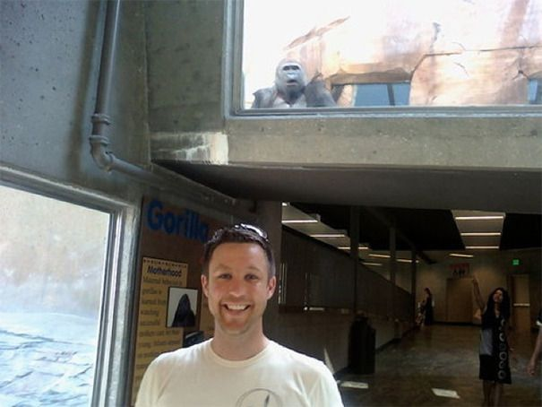 Funniest Animal Photobombs Of All Time I Just Cant Stop - 35 hilarious animal photobombs ever