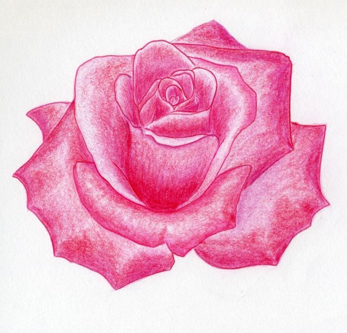 Rose Flower Drawings With Color To a real rose color ...