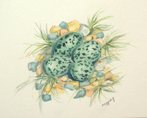 Watercolour Oystercatcher Nest, Original Painting Birds Eggs, Fine Art Birds Nest Painting, Nature Art £26.34