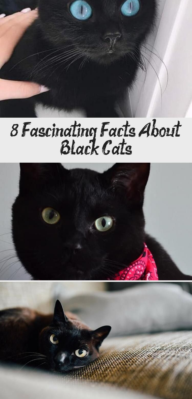 8 Fascinating Facts About Black In 2020 Cats Black Cat Appreciation Day