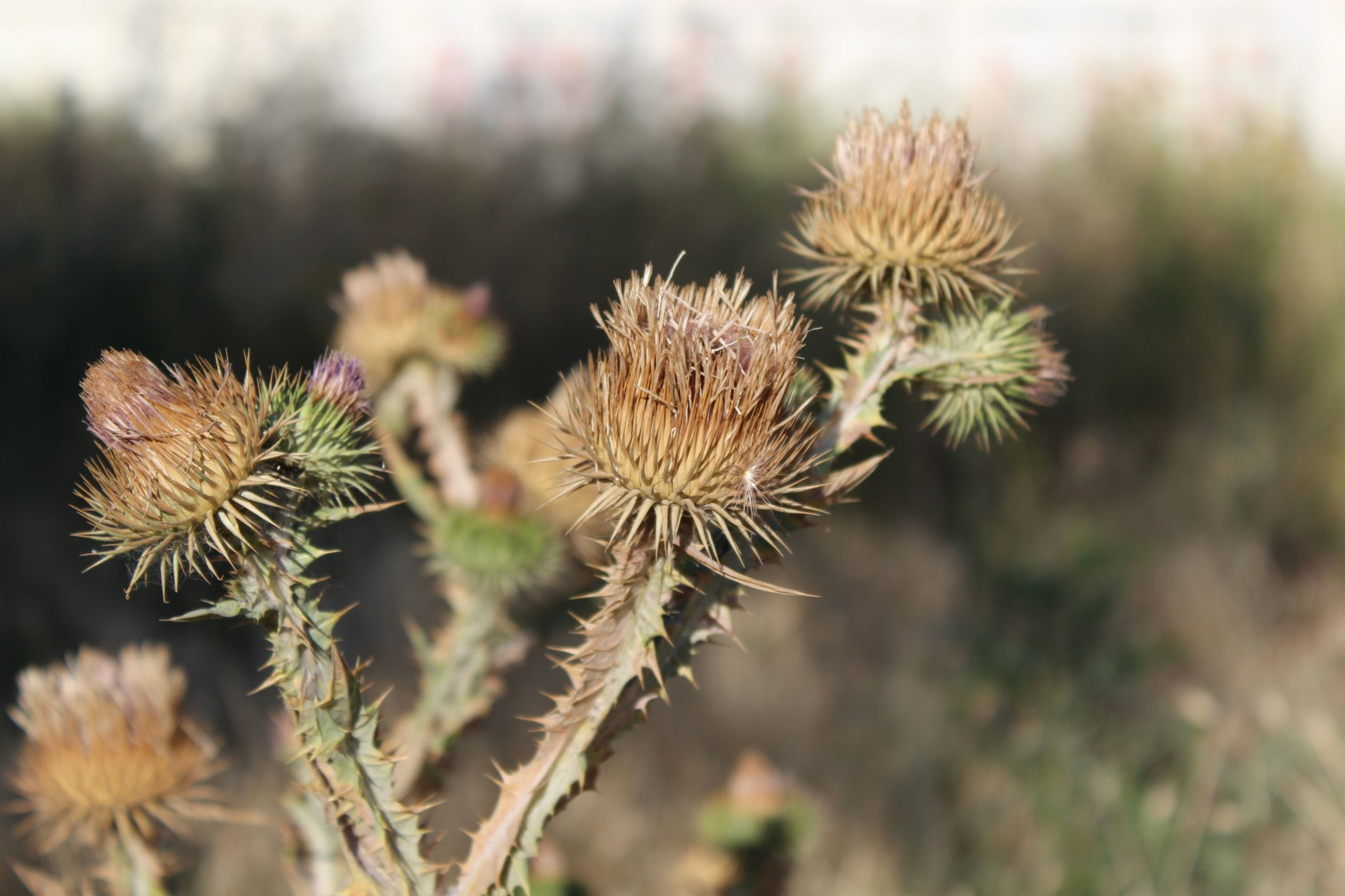 Healthfully Herbal remedies, Herbalism, Remedies
