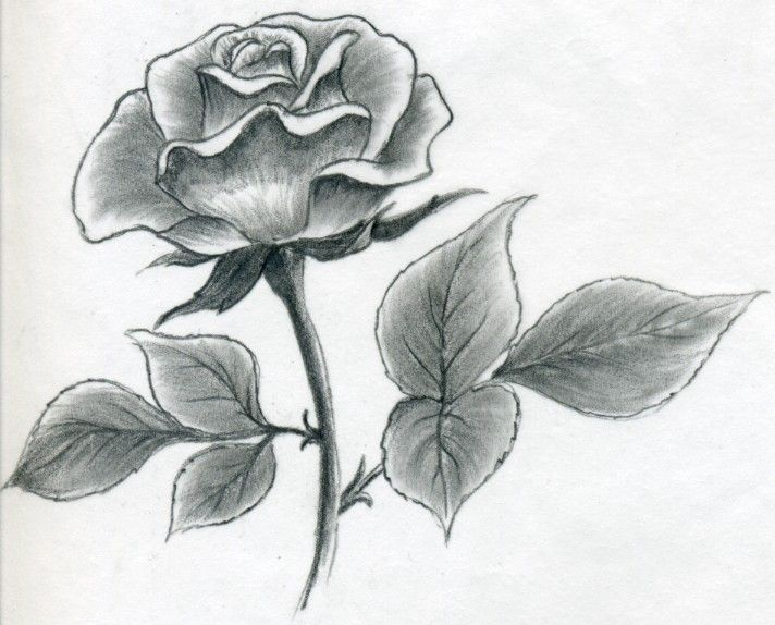 image result for l how to draw a simple rose