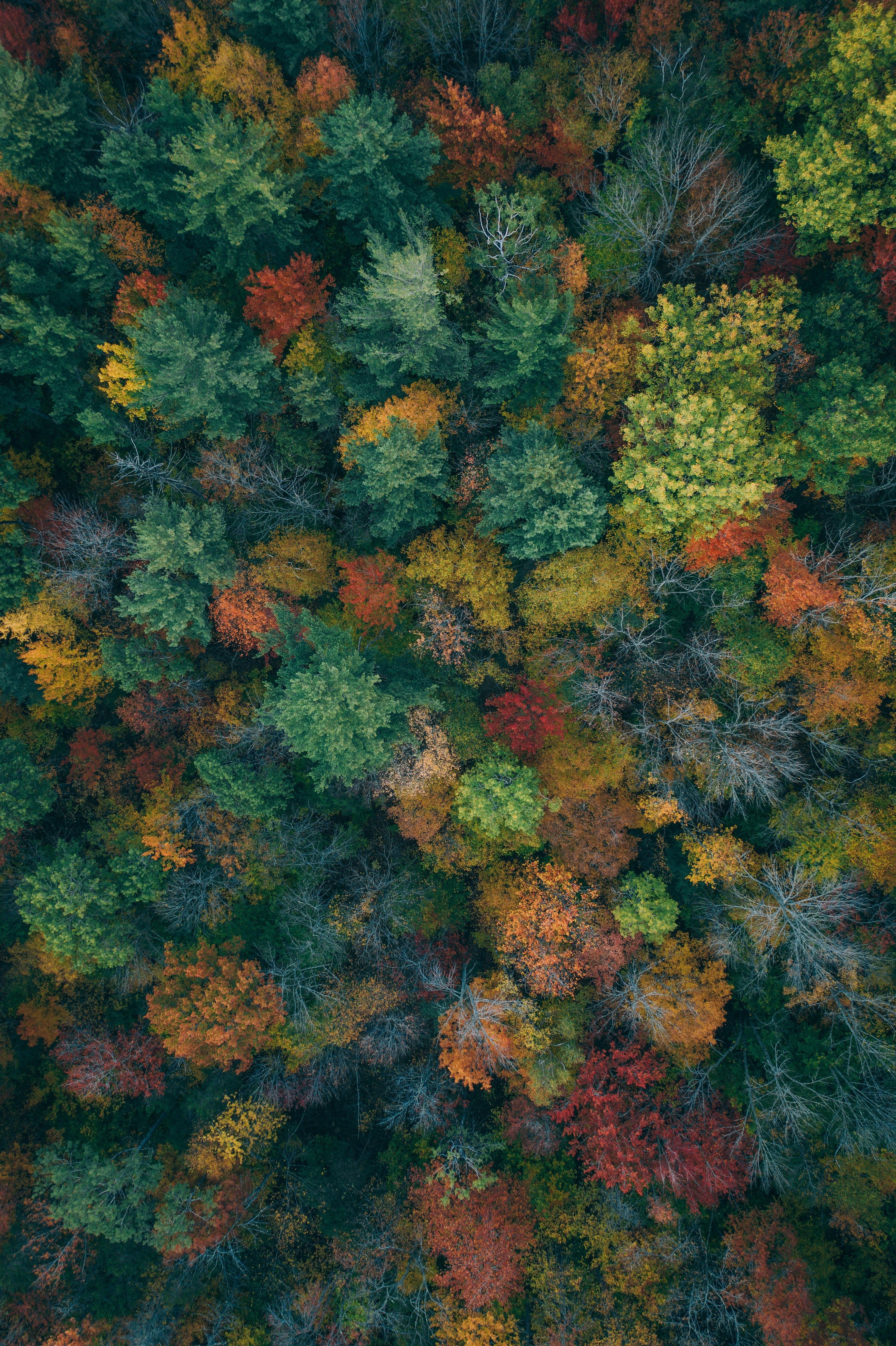 Trees Aerial View Autumn Autumn Colors Forest Colorful 5k Wallpaper Hdwallpaper Desktop Autumn Wallpaper Hd Forest Wallpaper Aerial View Hd wallpaper forest trees aerial view