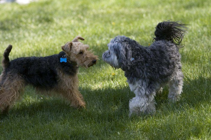 Small dog playgroups near me