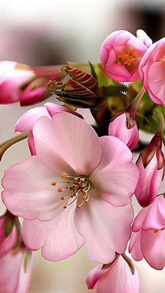 ЕЛЕНА ЕВТУШЕНКО - Google+   Экзотические цветы, Посадка ...