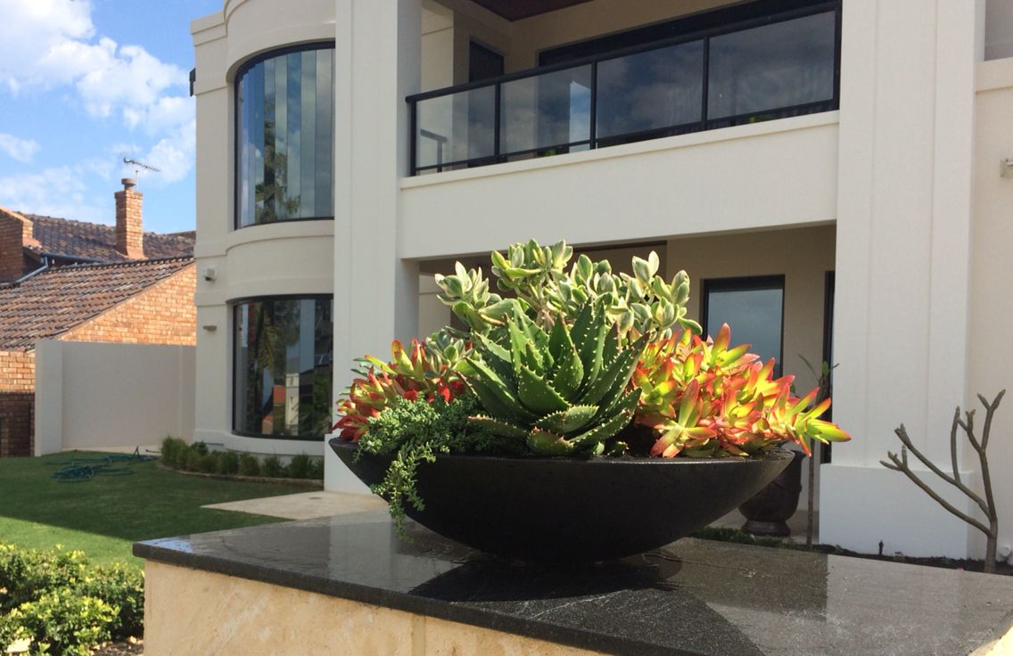 Large succulent bowl on display in City Beach. Perfect