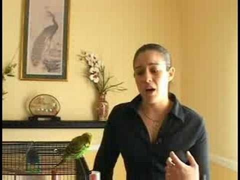 Caring for Parakeets : Safety Hazards for Parakeets