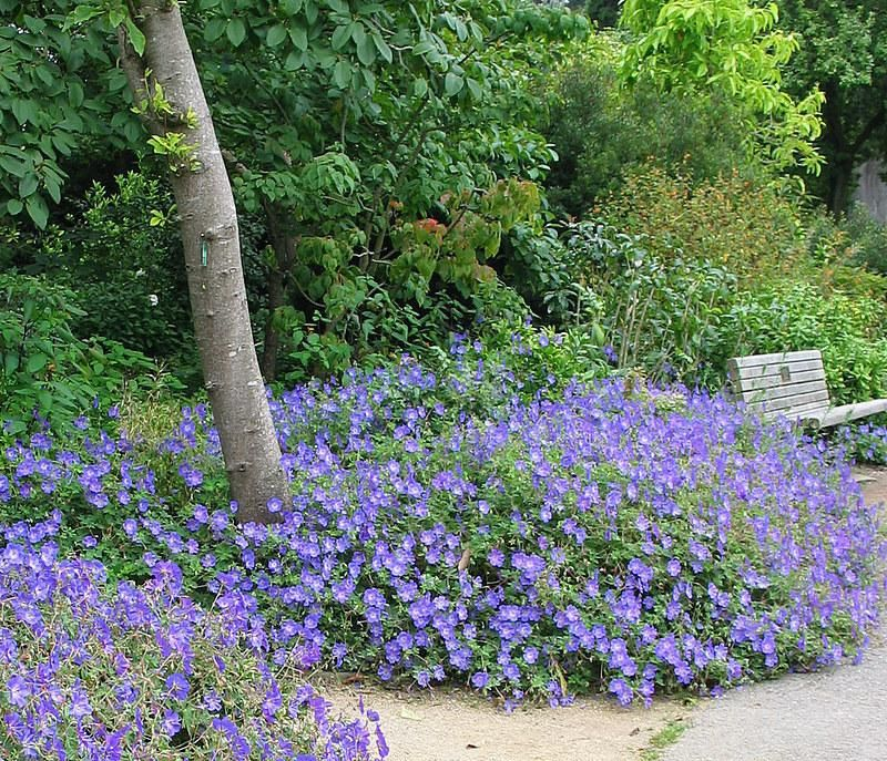Pin On Evening Shade Plants For Shady Areas