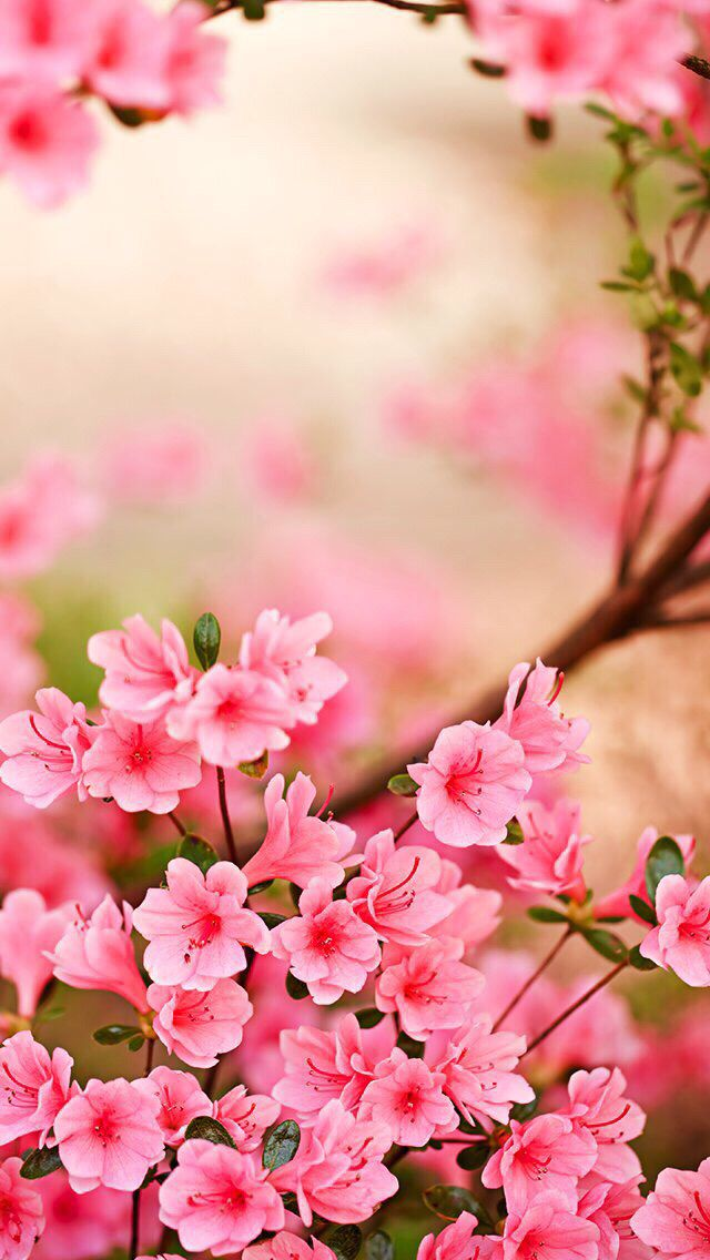 Wallpaper iPhone spring Spring Pinterest Wallpaper