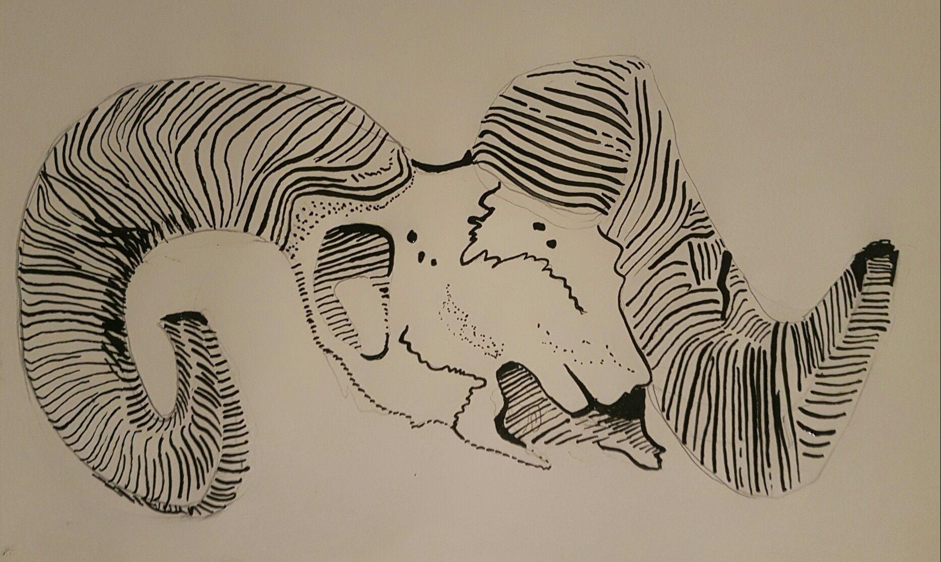 Skull bighorn sheep | Sheep, Animals, Art