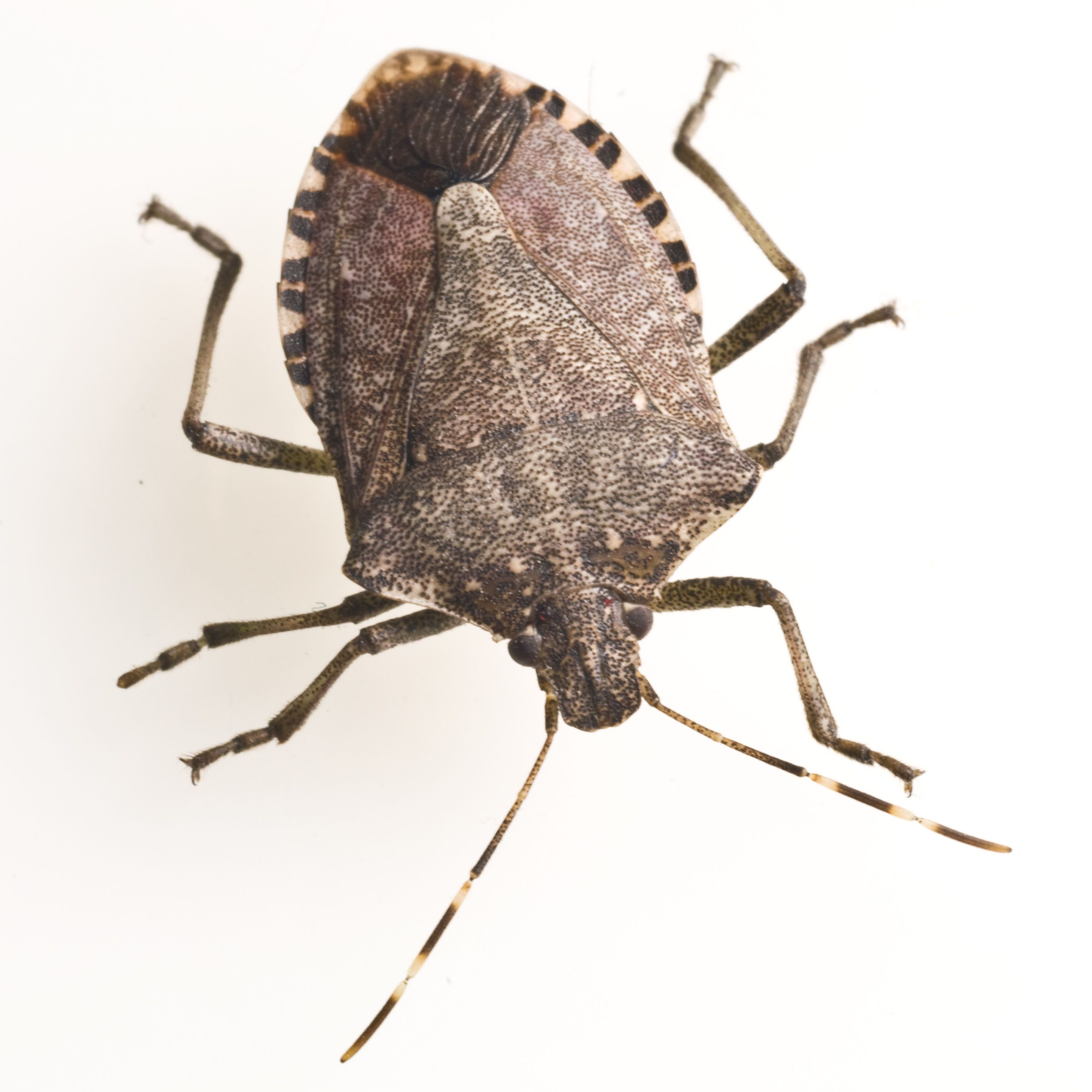 Types of Bugs with Pictures and Names  How to Prevent Bugs In House. Types of Bugs with Pictures and Names  How to Prevent Bugs In