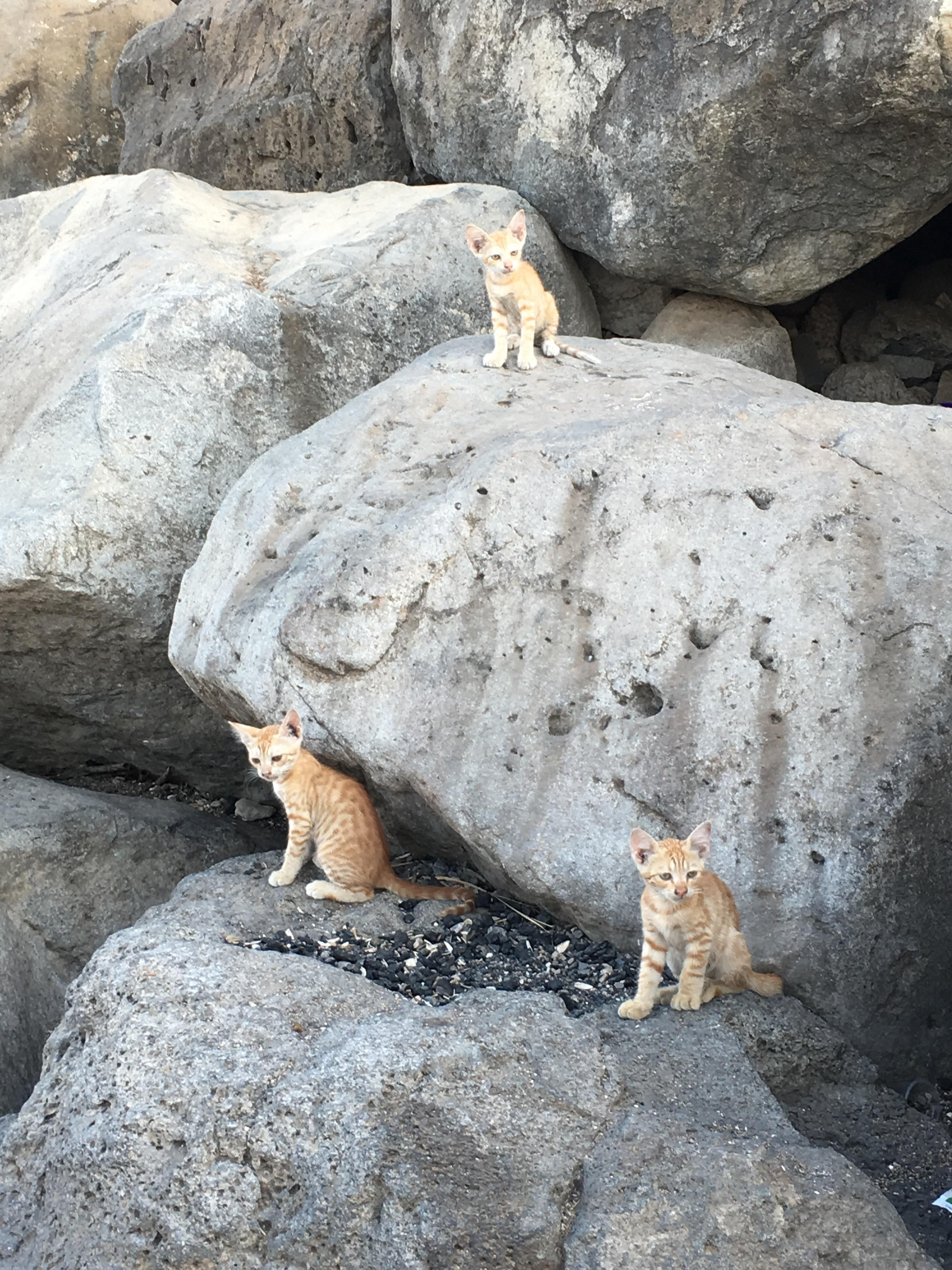 Any know this breed of wild cats in isreal?