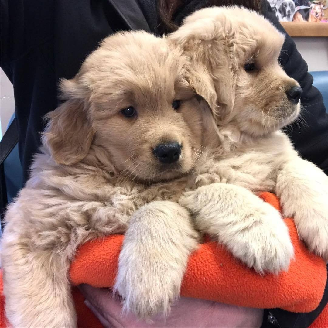 Pin by Natalie Deshow on Cute Animals Dog cuddles, Happy