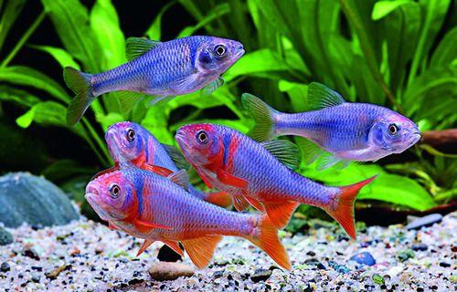 Aquascape On Tumblr Aquarium Fish Fish Tank Tropical Fish Tanks