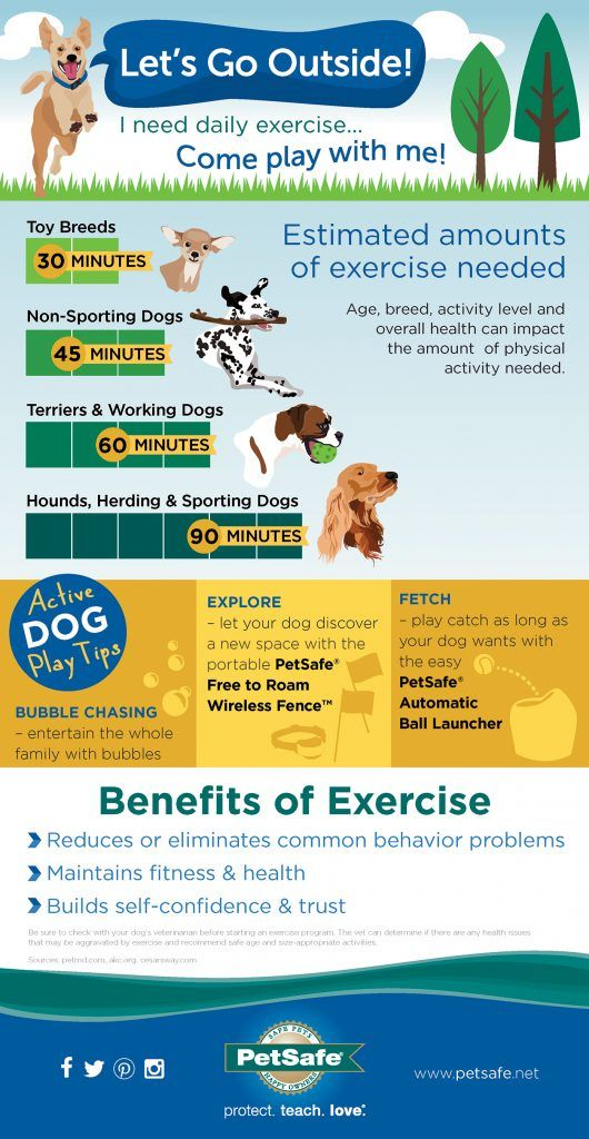 Infographic Creative Dog Play Ideas For The Outdoors Pet Hacks
