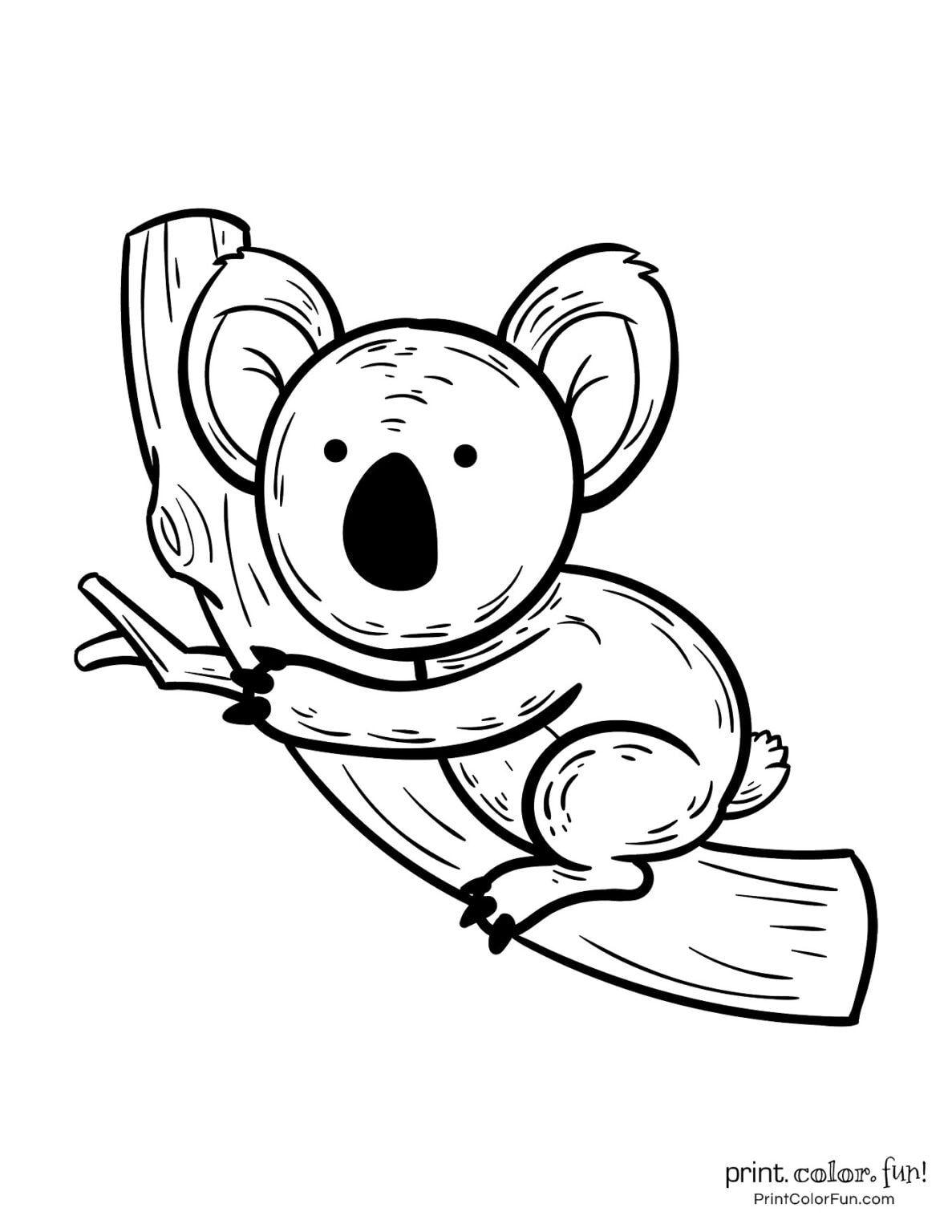 Pin On Koala Drawing