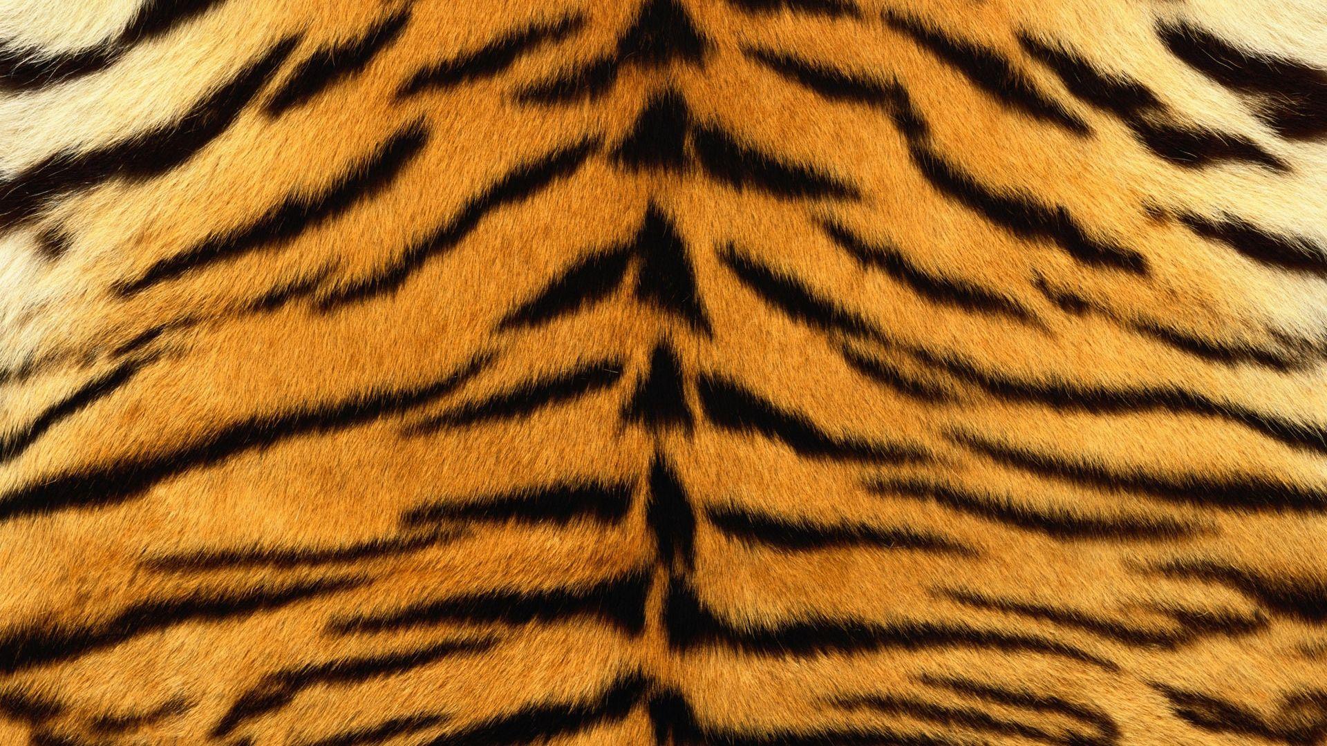 Download Wallpaper 1920x1080 Skin Tiger Stripes Fur Striped Full Hd 1080p Hd Background Tiger Skin Striped Art Tiger Stripes