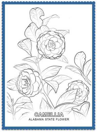 Alabama State Flower Camellia By Usa Facts For Kids Flower Coloring Pages Flower Drawing Tree Coloring Page