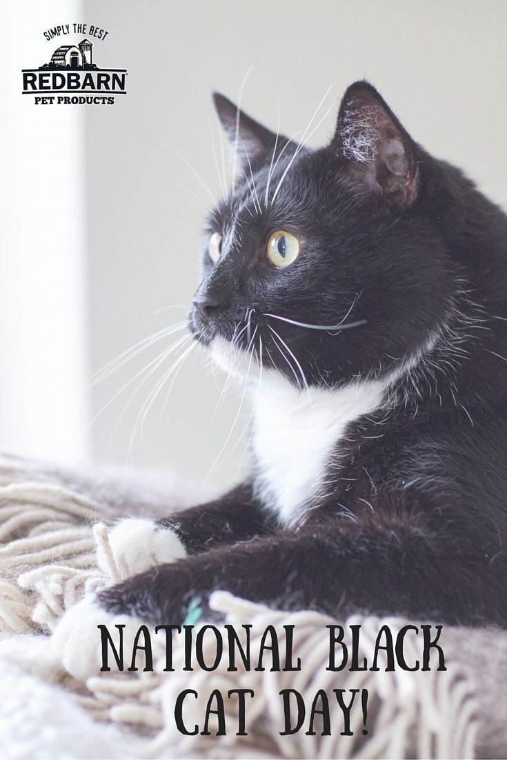 Happy National Black Cat Day How Will You Spoil Your Fur Baby Today National Black Cat Day Black Cat Day Cats