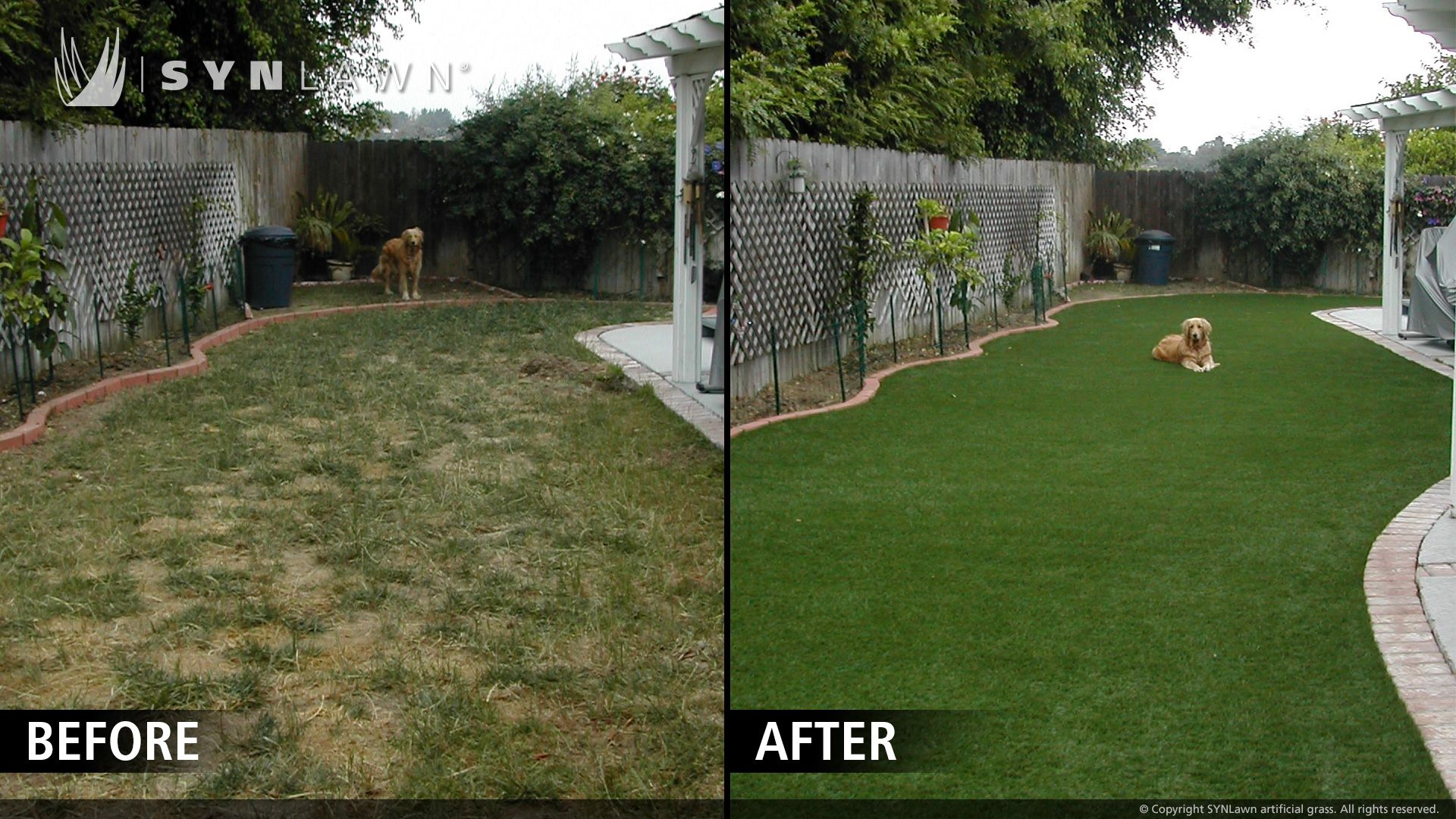 does your backyard look like this because of your dogs turn to